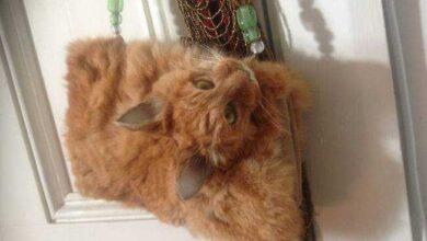 Foto de Mulher faz bolsa com gato morto e causa muita polêmica