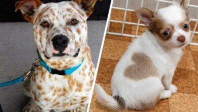 14 Cães que só podem ter sido desenhados pela mãe natureza