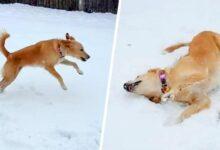 A reação deste cão ao ver neve pela primeira vez é incrível r