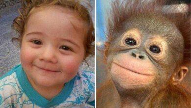 Foto de 15 Imagens mostrando que crianças e animais podem sentir as mesmas emoções