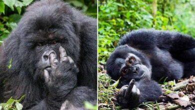 Foto de 15 imagens mostrando que existe bom humor na vida selvagem