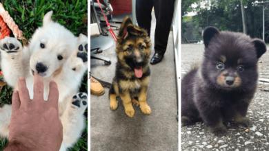 10 cãezinhos super fofos que parecem irreais