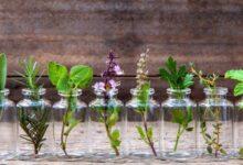 Foto de 10 ervas que você pode cultivar usando apenas água