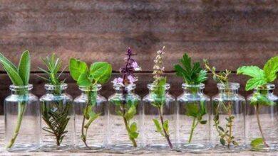 10 ervas que você pode cultivar usando apenas água