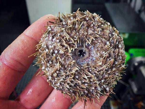 14 Criaturas BIZARRAS capturadas por pescadores russos