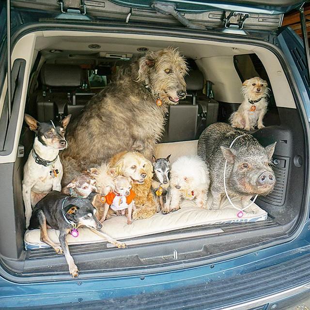 Homem dedica a vida a adotar animais que ninguém mais quer   Baú das DICAS