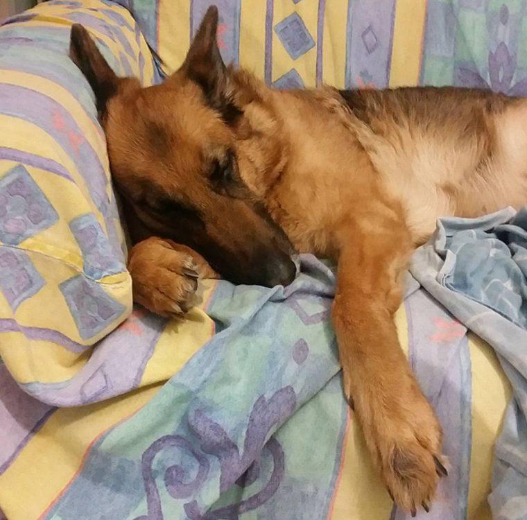 8 sinais de câncer em cães que os donos os não podem ignorar