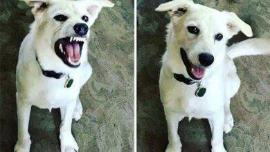 """Foto de 21 Fotos de animais antes e depois de serem chamados de """"bom garoto"""""""