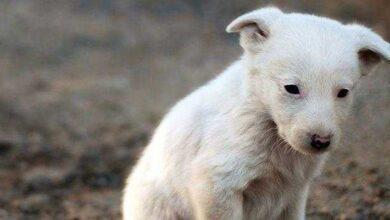 Foto de Cão foi abandonado por sua dona. Mas o que ele fez, irá fazer todos repensarem sobre o abandono de animais.
