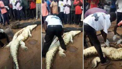 Corpo de menino é encontrado dentro de barriga de crocodilo