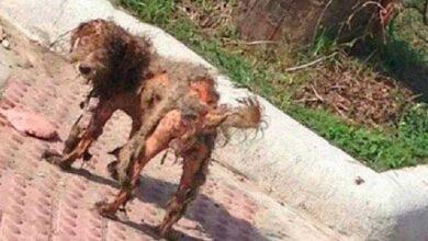 Foto de Foto de cão abandonado viraliza. Um olhar atentamente descobre um INCRIVEL segredo