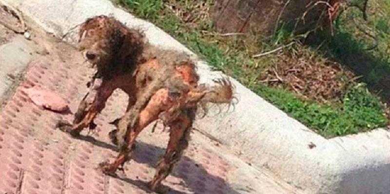 Foto de cão abandonado viraliza. Um olhar atentamente descobre um INCRIVEL segredo 1 Foto de cão abandonado viraliza. Um olhar atentamente descobre um INCRIVEL segredo