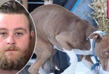 Homem é preso por abusar sexualmente de cachorra f
