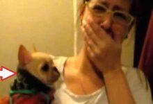 """Mulher disse """"I love you"""" para seu cãozinho, mas não esperava ouvir uma resposta como esta! f"""