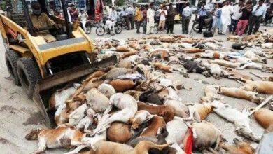 Foto de Prefeitura envenena mais de mil cães e promete matar mais 2 mil, veja