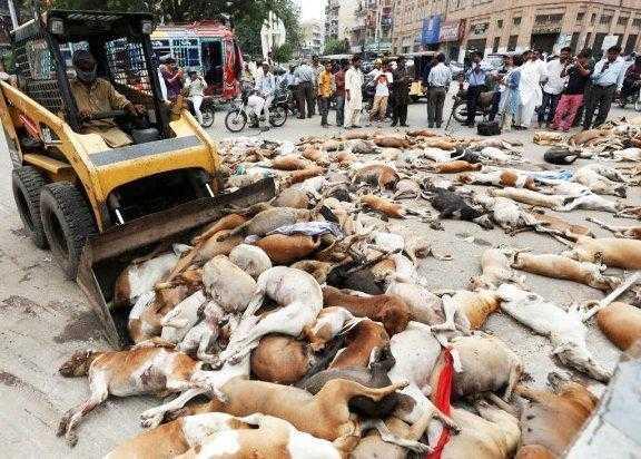 Prefeitura envenena mais de mil cães e promete matar mais 2 mil, veja f