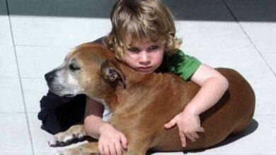Foto de Veterinário sedou cão com câncer – as últimas palavras do menino comove o mundo