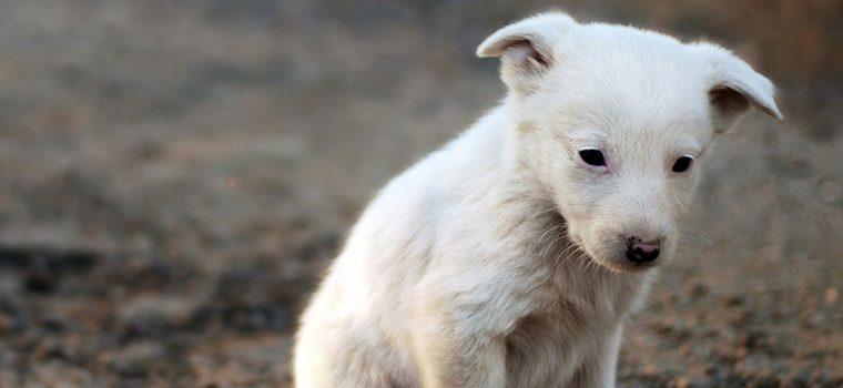 Cão foi abandonado por sua dona. Mas o que ele fez, irá fazer todos repensarem sobre o abandono de animais.