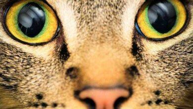 Confira vídeo que mostra como é a visão dos animais