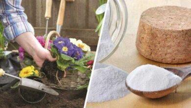 Usos inteligentes que o bicarbonato pode ter na jardinagem