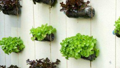 Foto de 12 Alimentos que pode cultivar em garrafas de plástico