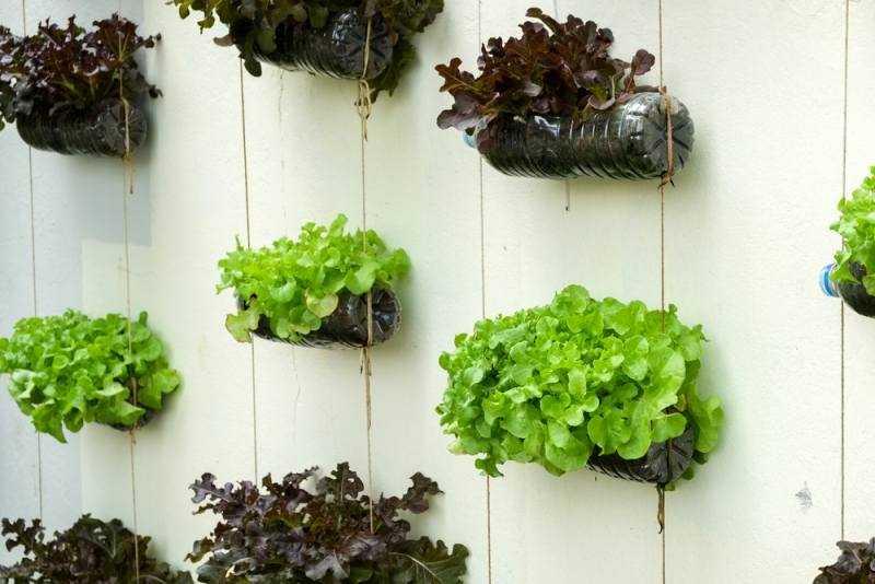 12 Alimentos que pode cultivar em garrafas de plástico