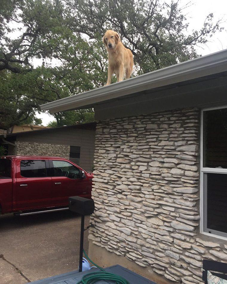 Família faz cartaz explicando por que seu cão está no telhado, e ele está se tornando viral na internet