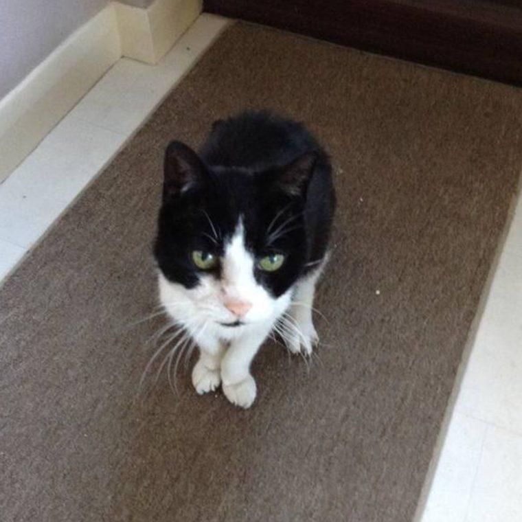 1496070158 454 o comportamento estranho desse gato salvou a vida de sua dona - O comportamento estranho desse gato salvou a vida de sua dona