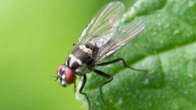 7 truques caseiros para afastar as moscas da cozinha