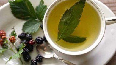 Foto de Benefícios do chá de folha de amora