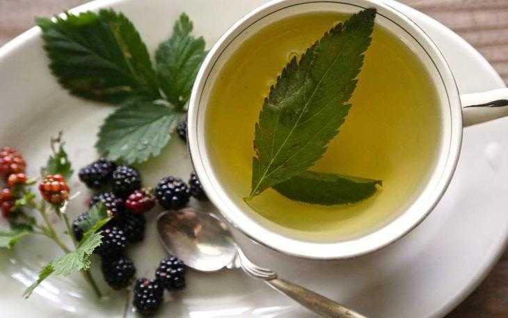 Benefícios do chá de folha de amora ed