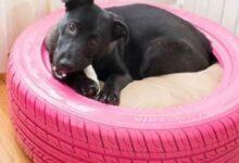 Foto de Transforme pneus velhos em cama para cães e gatos