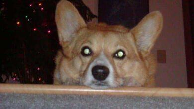 Foto de Cão fixa olho em dono todas as noites! Veja o motivo!