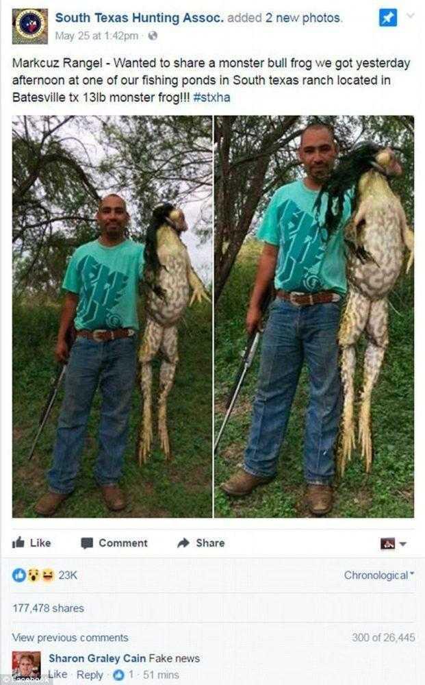 Imagem de sapo gigantesco viraliza e internautas querem saber se é real!