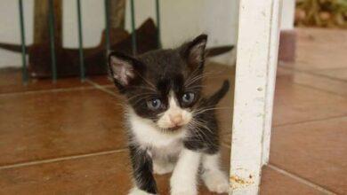 Photo of O comportamento estranho desse gato salvou a vida de sua dona