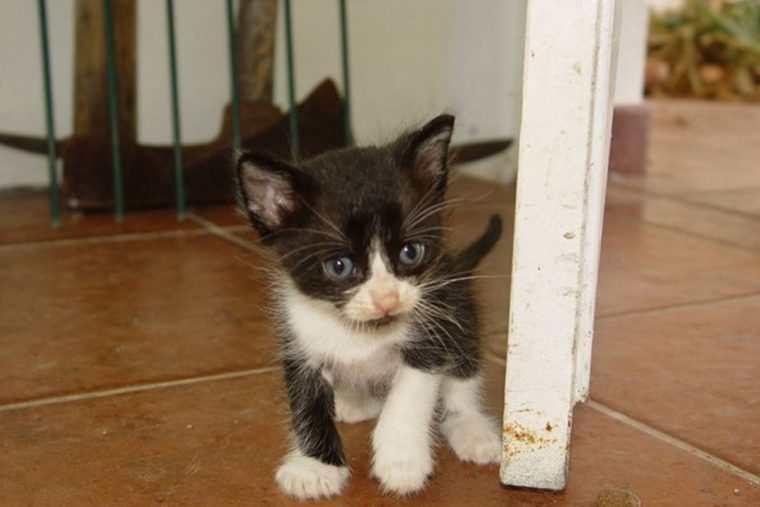 o comportamento estranho desse gato salvou a vida de sua dona - O comportamento estranho desse gato salvou a vida de sua dona