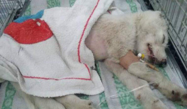 A vida dessa cadela atropelada e abandonada dentro de um saco mudou por causa de pessoas bondosas | Baú das DICAS