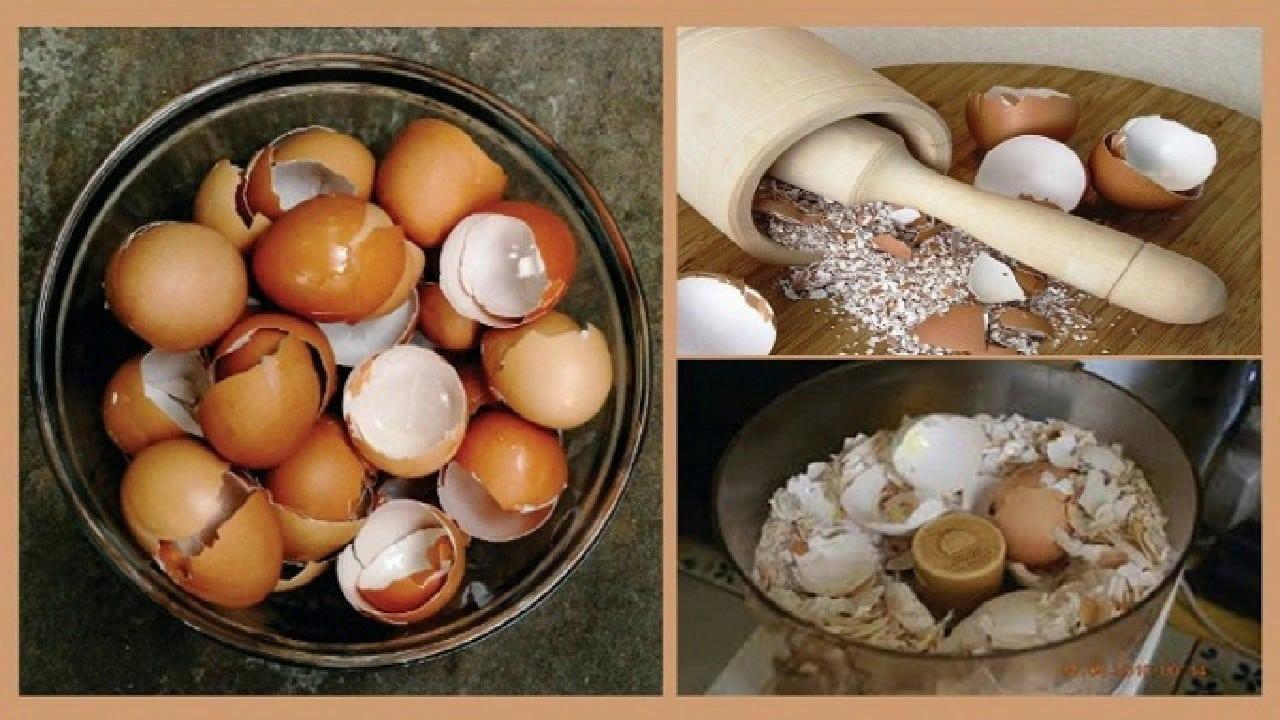 4 Utilidades da casca de ovo simplesmente INCRÍVEL