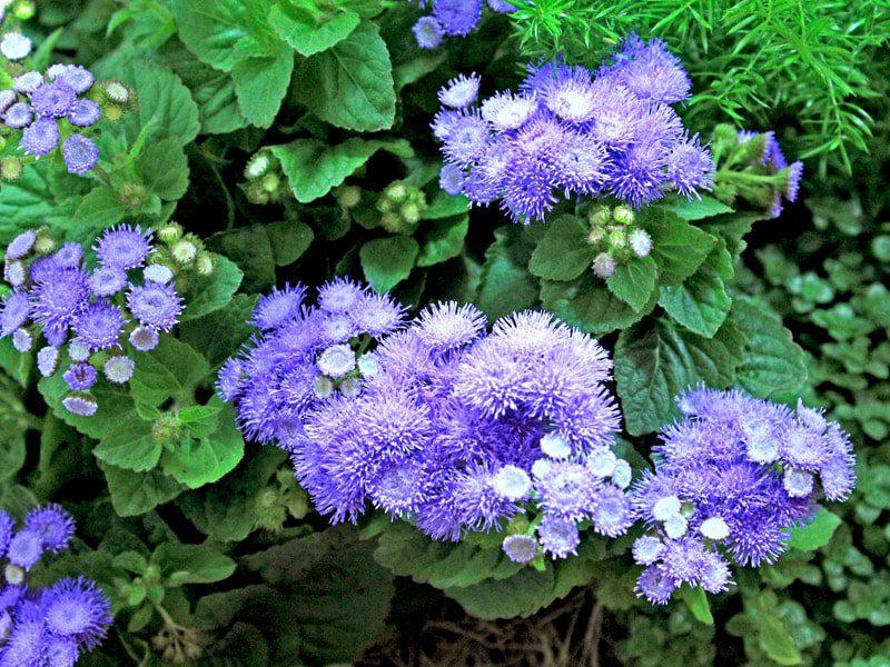 5 Plantas que repelem insetos naturalmente