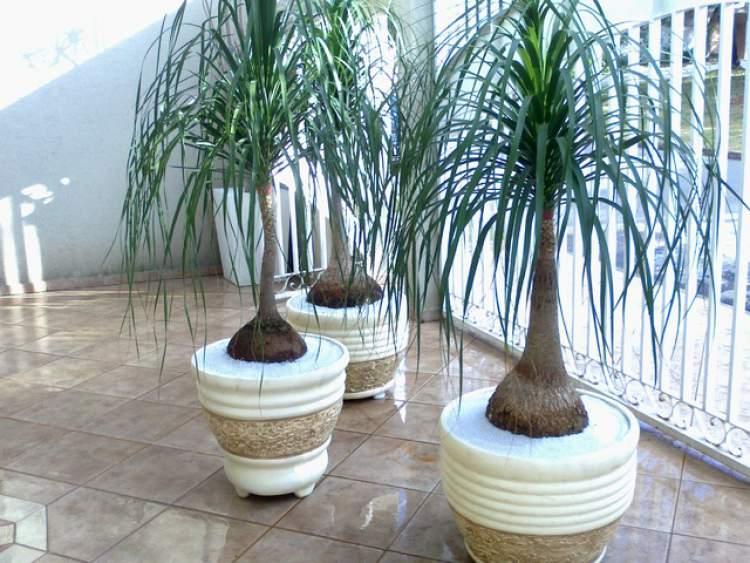 11 Plantas para colocar dentro de casa e que não precisam de muita água | Baú das DICAS