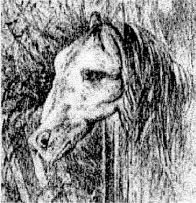 Você consegue encontrar o cavalo escondido nessa imagem?