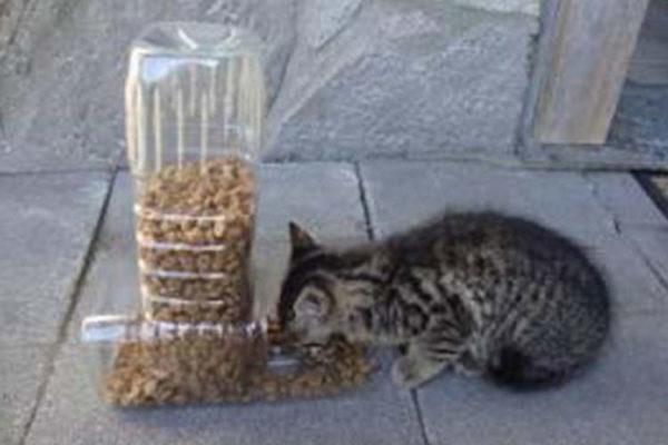 10 Maneiras úteis e criativas de reciclar garrafas PET 8