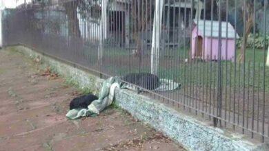Foto de Cadela divide cobertor pela cerca com cão de rua, no frio