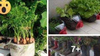 Economize com verduras… Aqui lhe ensinamos como cultivá-las na sua própria casa sem nenhum agrotóxico!