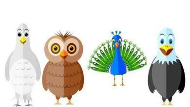 Qual pássaro mais representa a sua personalidade?