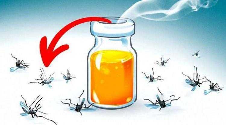 6 aromas que espantam os mosquitos