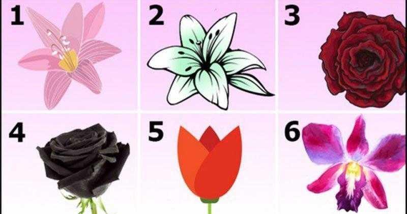 Escolha a flor mais bonita e descubra um segredo surpreendente sobre sua personalidade!