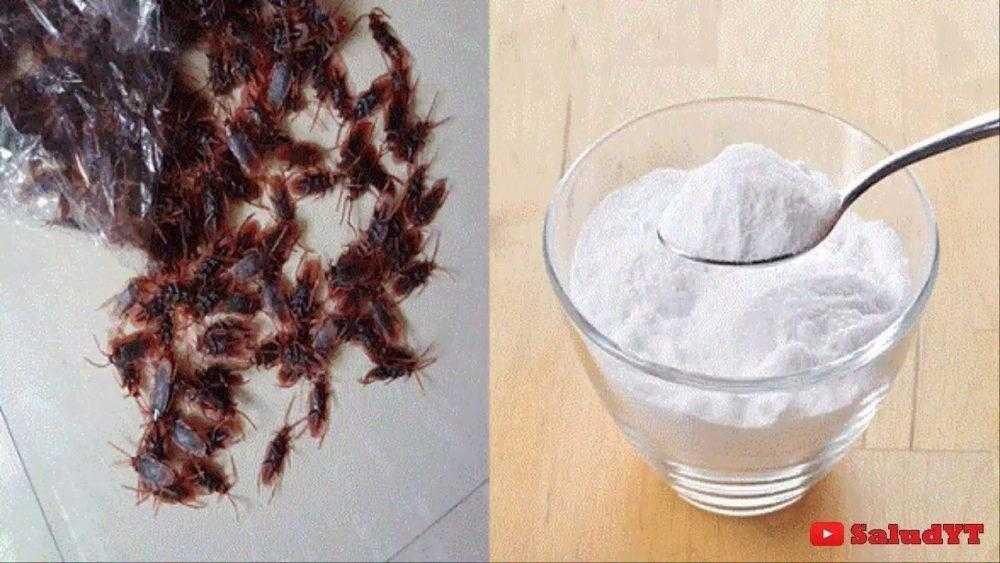 Mistura caseira para eliminar as baratas de casa