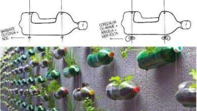 Foto de Como fazer horta com garrafa pet