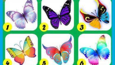 Foto de Teste das borboletas: Veja o que elas dizem sobre sua personalidade!